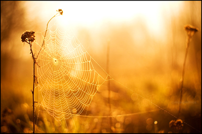 Spider-web by mjagiellicz